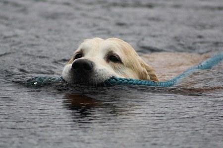 Concours international de chiens de sauvetage